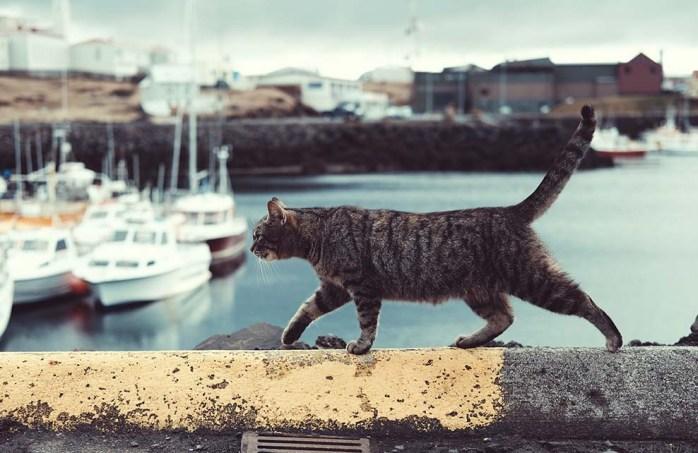 22 bonnes raisons d'adopter un chat'