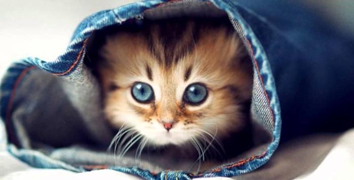 22 bonnes raisons d'adopter un chat