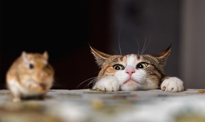 souris22 bonnes raisons d'adopter un chat