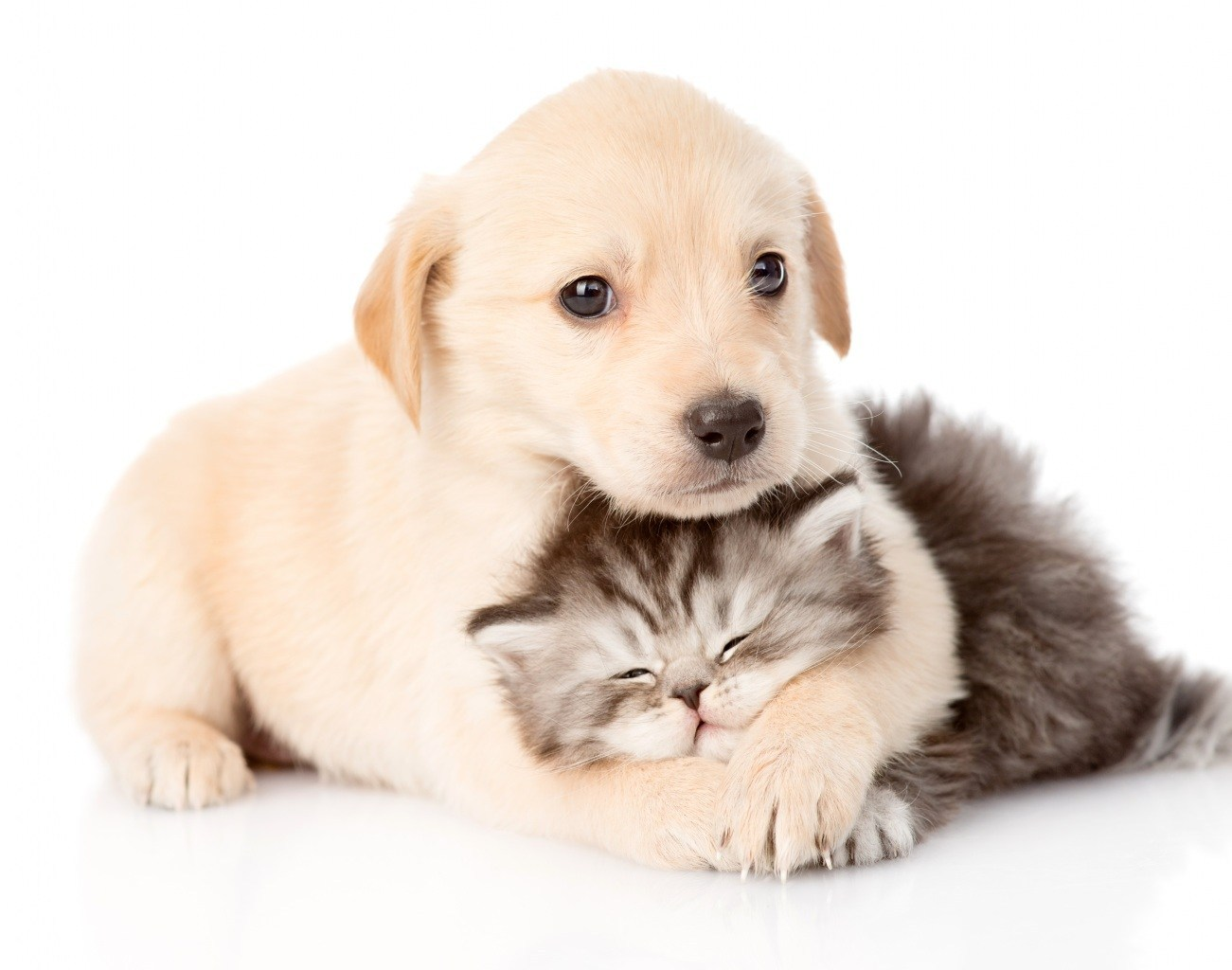 journee-international-calin-bienfait-chien-chat-mignon